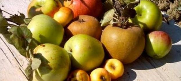 la riscoperta dei frutti antichi