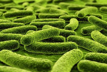 microbi del suolo
