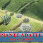 PIANTE PER SCARPATE