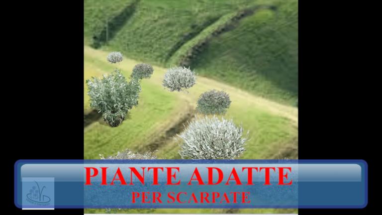 Read more about the article PIANTE PER SCARPATE