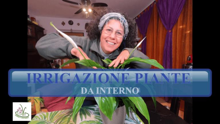 Read more about the article COME INNAFFIARE LE PIANTE IN CASA sopratutto quando si va in vacanza